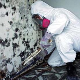Mold_Removal